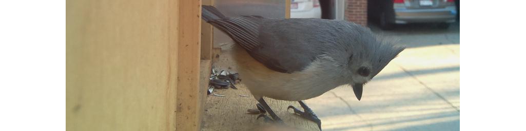 Paparazzi bird feeder feature image